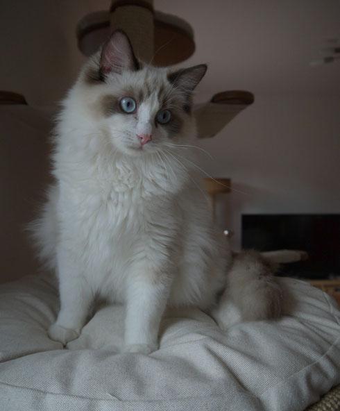 Quincy, 7 Monate