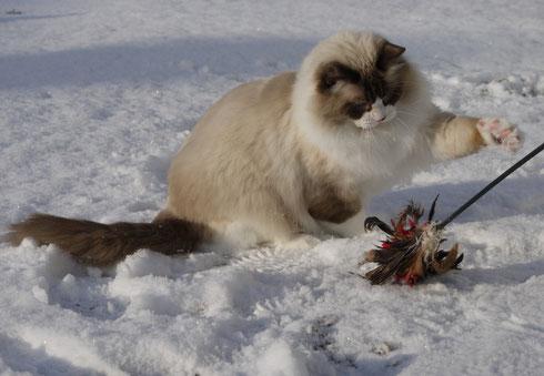 Puschel UND Schnee!! Klasse!!