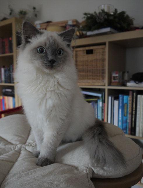 Kiss Chase, 6,5 Monate alt