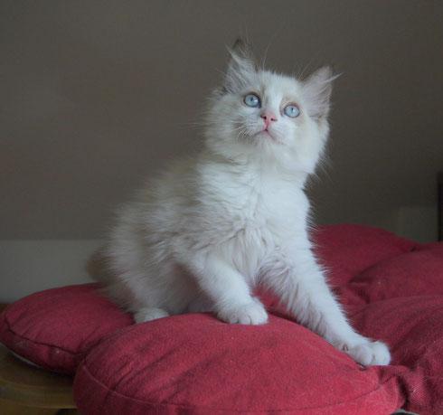 12,5 Wochen alt
