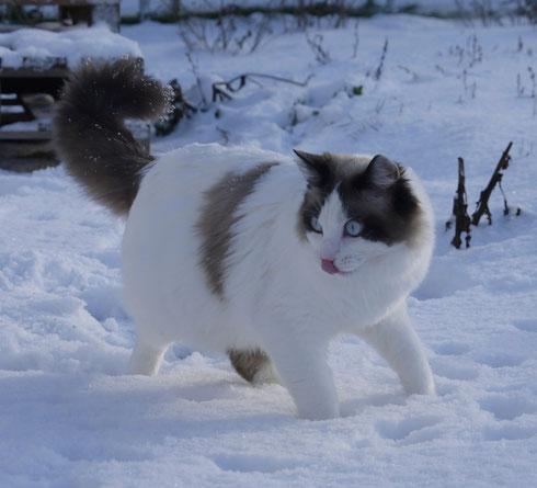 9,5 Monate alt! Der ERSTE Schnee!! Interessant!!