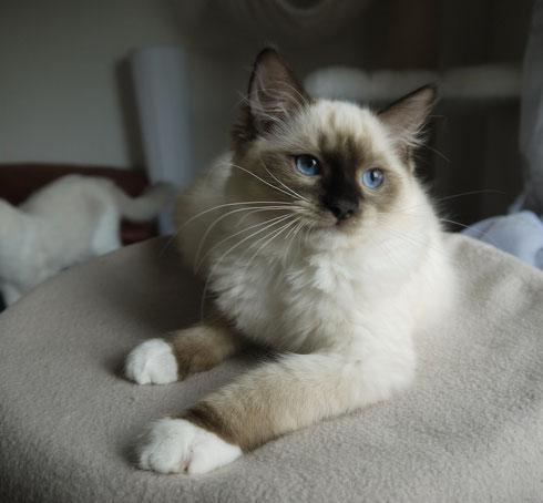 Alfie, 4 Monate