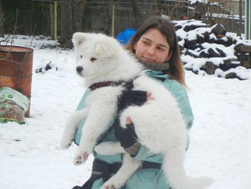 Ajoka dreaming Tenya (Hündin weiß) bereichert auch in Zukunft unser Rudel. Sie wird bei uns bleiben.
