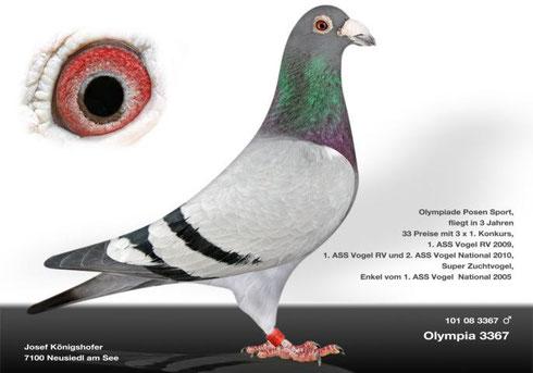 """Olympia 3367"""
