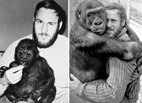 Fotos: Seniorchef Peter Geßmann mit Gorilla.