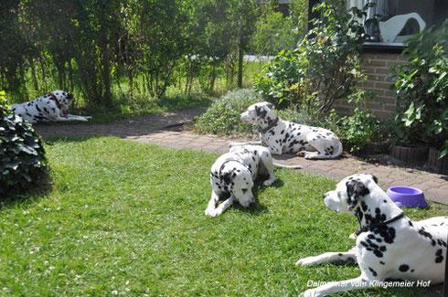 Aber auch die schönsten Ferien gehen mal zu Ende: Zum Abschied noch ein Gruppenbild im Garten in Holland.