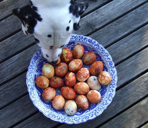 Ostergrüße kamen auch von Dietke aus Lettland