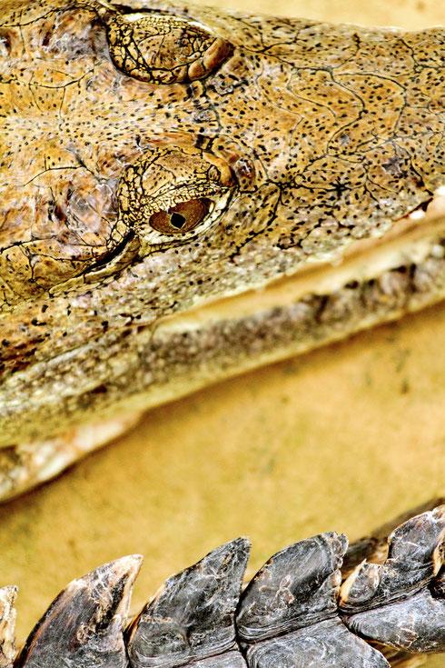 Krokodil Zoo Frankfurt