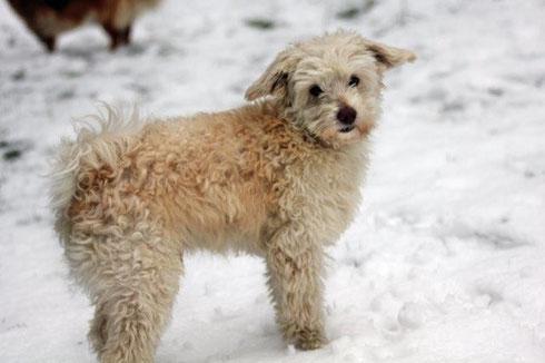 Chester hat das Herz seiner neuen Besitzer aus Haan im Sturm erobert.