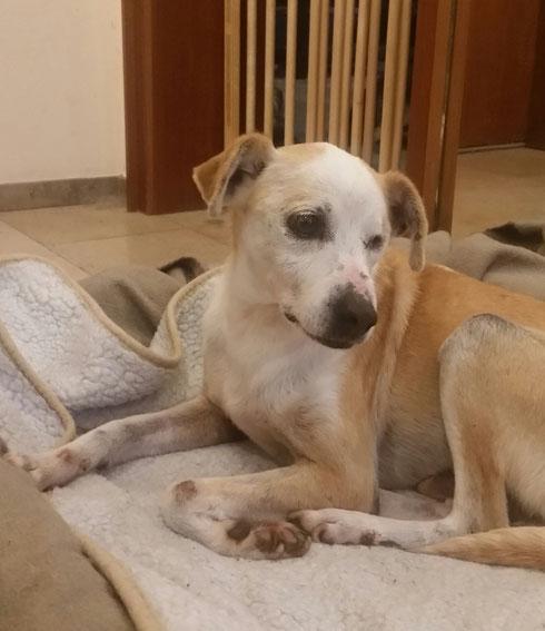 Carletto darf als eigener Hund in seiner Pflegestelle in Schermbeck bleiben.