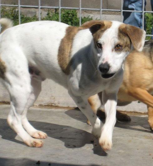 Gianduia wohnt nun mit Hundekumpel Henry bei Bamberg.