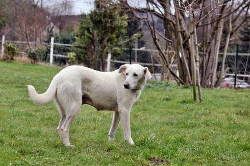 Bella lebt mit ihrem Herrchen in Hattingen.