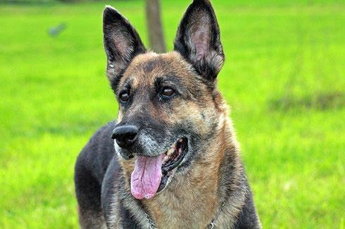 Dakota darf als eigener Hund bei unserem Teammitglied Marita leben.