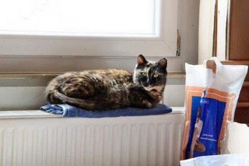 Unsere sanfte Loretta hat ihren Dosenöffner in Wuppertal gefunden.