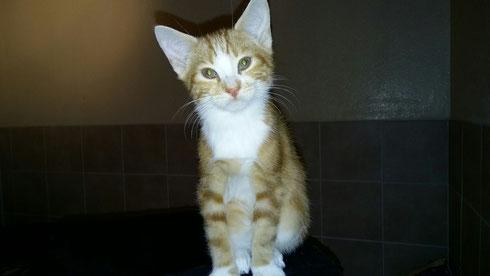 Lorenzo wohnt ab jetzt mit einer anderen Katze in Leverkusen zusammen.