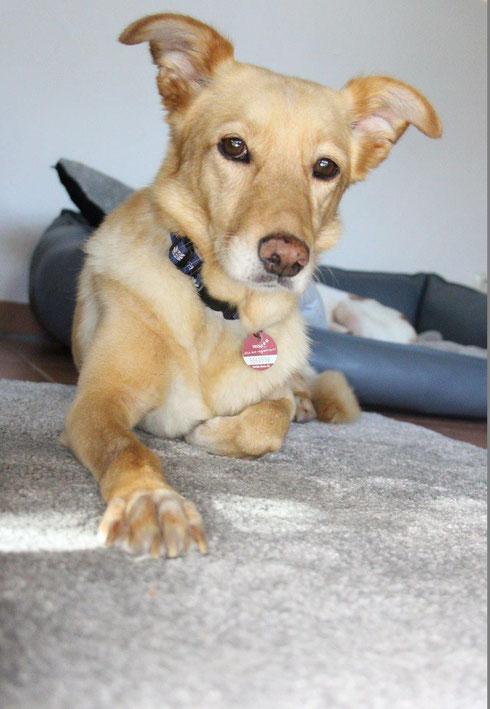 Silvestra ist jetzt Familienhund in Bamberg.