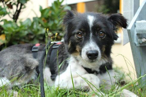 Kiwi lebt jetzt mit einer Hundefreundin im Altenkirchener Land.