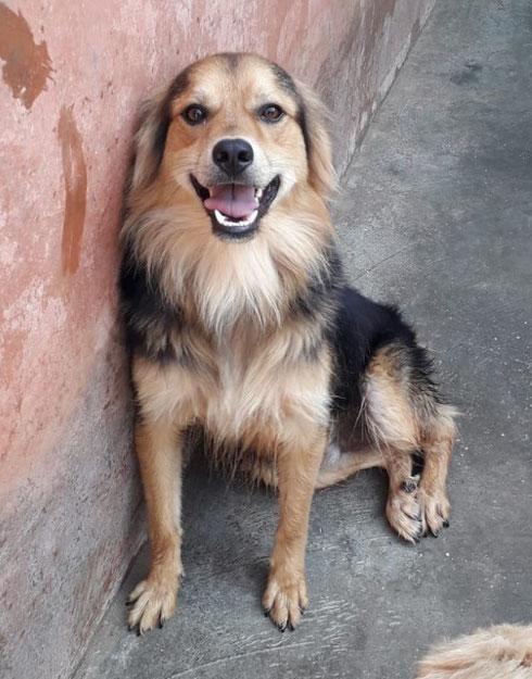 Romy darf als eigener Hund in seiner Pflegestelle in Würzburg bleiben.