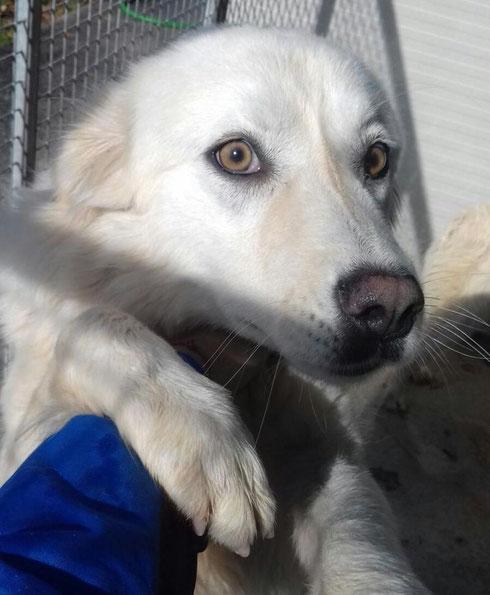 Candice bleibt als eigener Hund in ihrer Pflegestelle in Fürth.