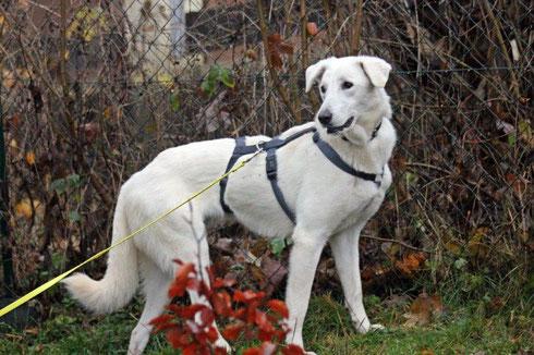 Zora ist zu zwei kleinen Hunden nach Witten gezogen.