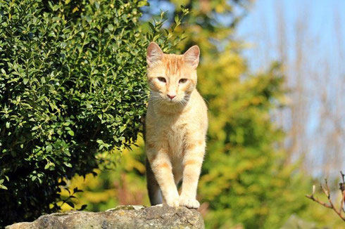 Leon ist zu 2 anderen Katzen nach Leverkusen gezogen.