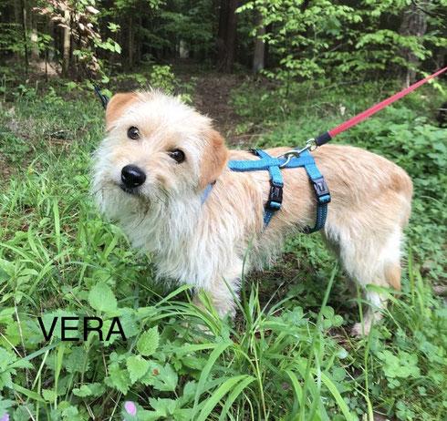 Vera lebt ab jetzt in Ulm.