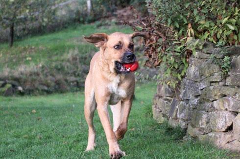 Tobia ist in eine Familie nach Remscheid gezogen.