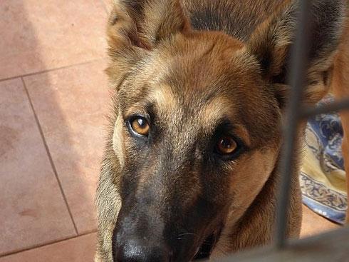 Miguel ist in die Nähe von Gießen zu 3 anderen Hunden gezogen.