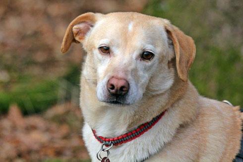 Doggy darf auf seiner Pflegestelle in Wuppertal bleiben.