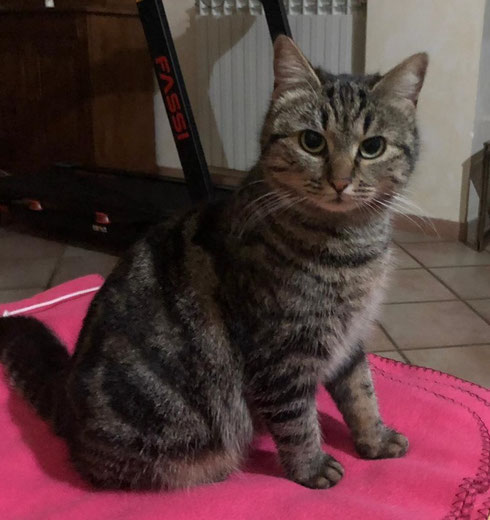 Zizi darf auf ihrer Pflegestelle bei Bamberg bleiben.