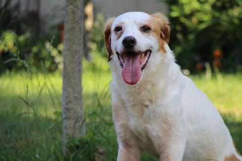 Dylan darf als eigener Hund auf seiner Pflegestelle bei Bamberg bleiben.