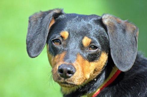 Amo ist von einer Familie in Wuppertal adoptiert worden.