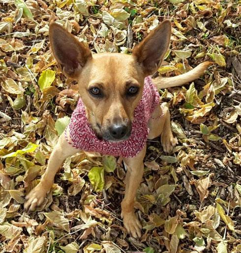 Scarlett lebt jetzt in Schwäbisch Hall mit ihrem Herrchen und 2 anderen Hunden.
