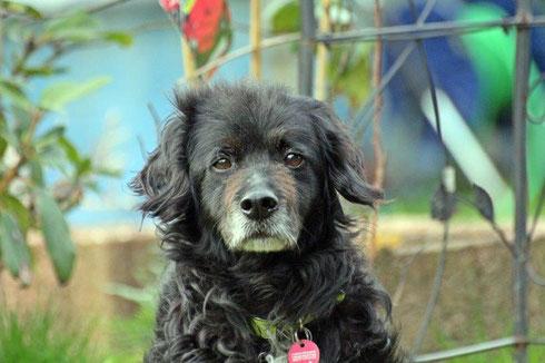 Sugar lebt nun mit Doggy zusammen in Wuppertal.