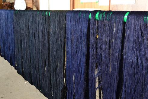 水戸黒に染めた糸ボッチはこれから本藍を重ねて深い色に染め上げます 藍を4回重ねてあります。     写真左中央