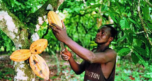 Les planteurs de Madagascar à l'honneur