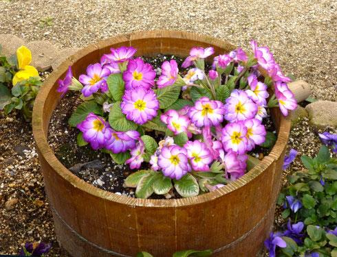 お花と木の鉢とがマッチ!