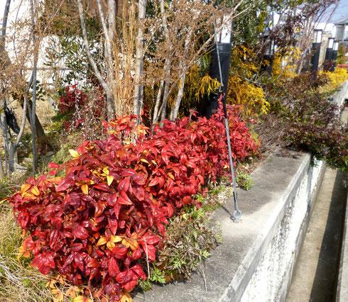 これは造園のプロの技! ~ 冬枯れのお店の前をうまく彩る。