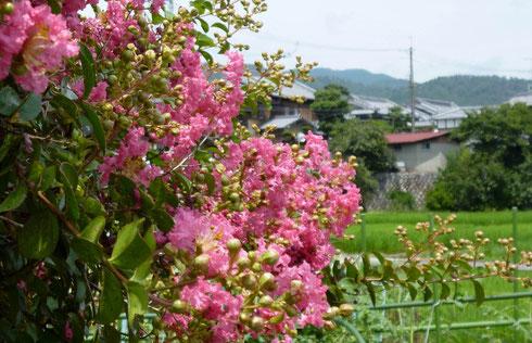 向こうは芝の農村集落・・萱野三平・旧宅のある村です。