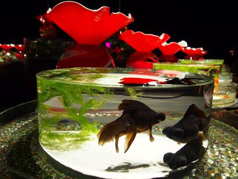水面が波立たない円形の水盤に金魚が泳ぎ、その後ろに金魚の姿を思わせるガラスアート作品「Kingyo」が並ぶ作品