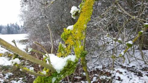 Kräftiges Grün und ebensolches Gelb überraschen mitten im kalten Weiss