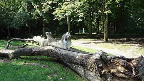 Milka im Hirschgarten - August 2013