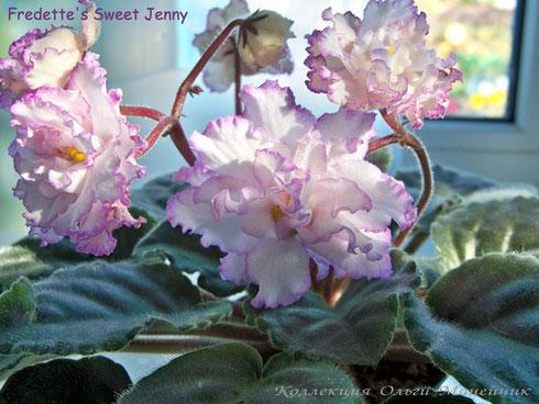 Fredette's Sweet Jenny