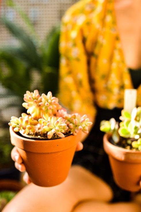 Pflanzen Haul — Mit nur einem Einkauf zu einer grünen Wohnung RiekesBlog.com