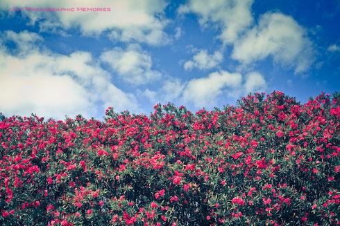 仁徳天皇陵 お堀近くに咲く花