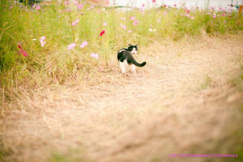 猫丸も散歩に来ました☆