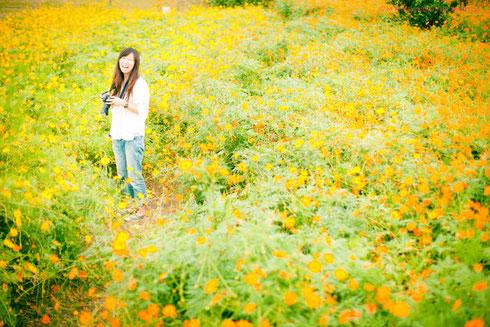 2012年10月 コスモスを撮りにいきましたね☆