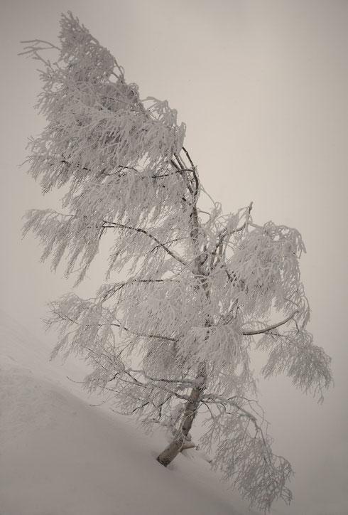 MG0865 • Délice glacé •
