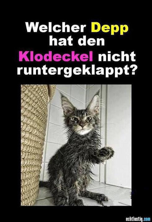 Lustige Bilder Katzenklo