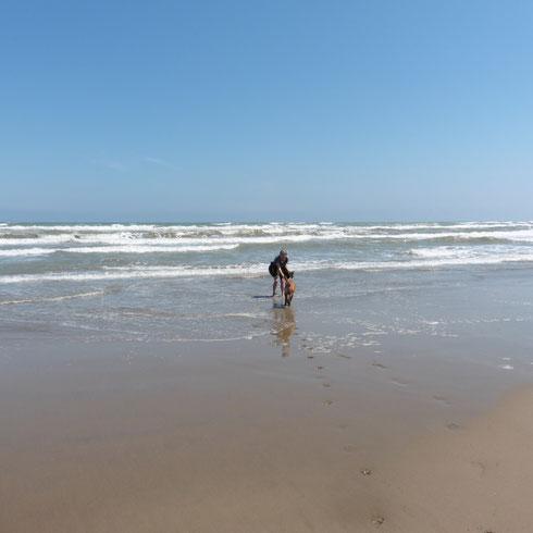 Mit Odin am Strand bei Gruissan 2